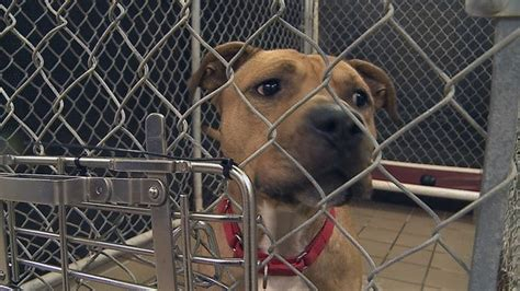 Mahoning Dog Pound puts out call for food donations - WFMJ