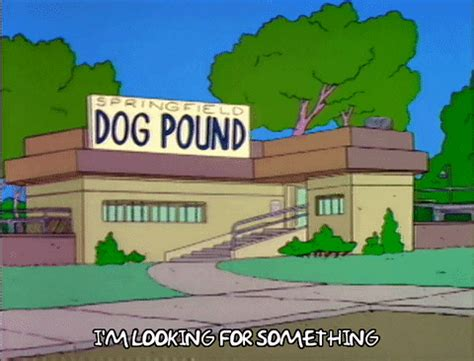 Dog-Pound GIFs - Find & Share on GIPHY
