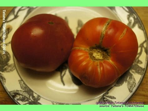Tomaten-Atlas - Detailansicht - Tuxhorn's Red and Yellow